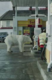 Greenpeace-Homeless-Polar-Bear8-640x360