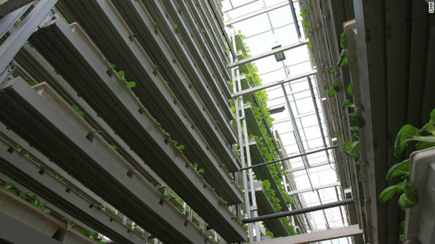 121205042140-singapore-vertical-farm-4-horizontal-gallery
