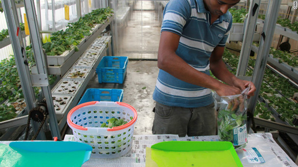 121205043115-singapore-vertical-farm-7-horizontal-gallery