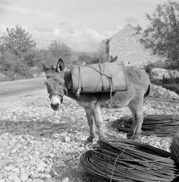magarac s vucijama